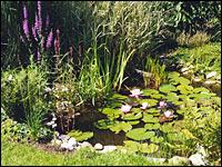 Tr be aussichten f r den teich landwirtschaftskammer for Gartenteich sauerstoff