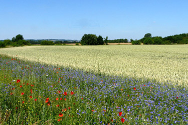 https://www.landwirtschaftskammer.de/fotos/naturschutz/bluehstreifensommer.jpg
