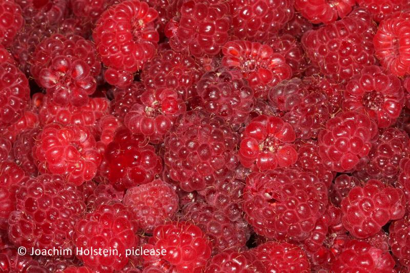 Obst und wein locken fliegen an landwirtschaftskammer for Fliegen in blumenerde vernichten