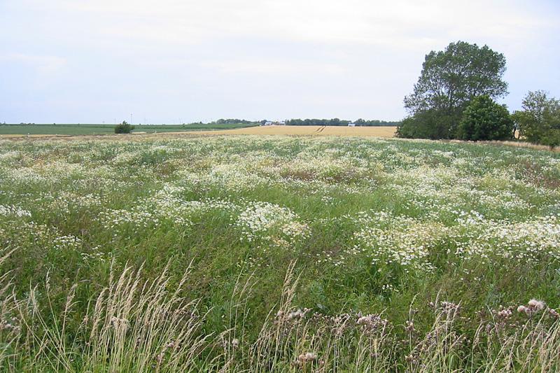 greeningprämie - landwirtschaftskammer nordrhein-westfalen