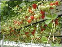 Versuche Im Obstbau Am Standort Koln Auweiler Gartenbauzentren Der