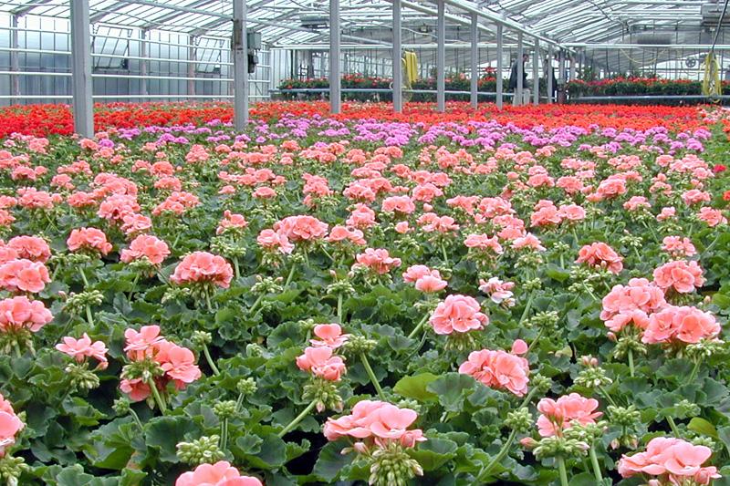 Vorbereitung Auf Die Beet Und Balkonpflanzen Gartenbauzentren Der