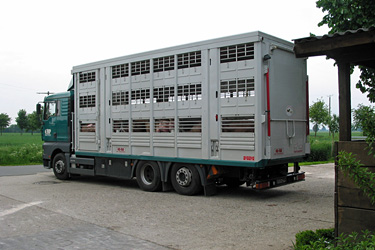 Tiertransporter